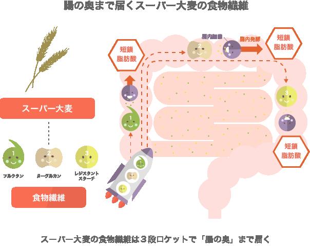 腸の奥まで届くスーパー大麦の食物繊維